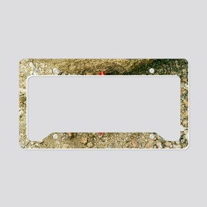 Hyobanche sanguinea License Plate Holder